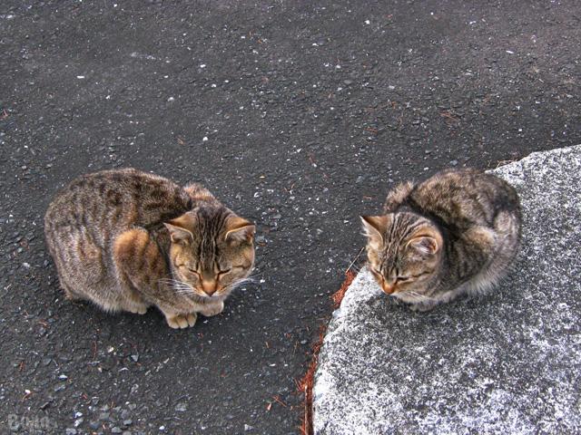 111213-cats3b.jpg