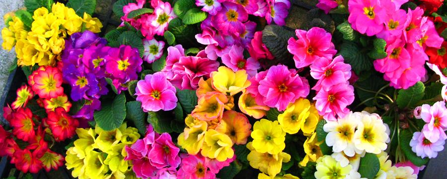花c.jpg