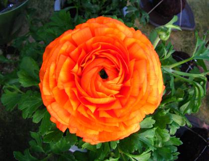 花e.jpg